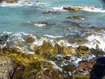 kelp, rocks and waves at Point Roadknight