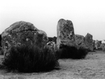 Many large standing stones,  Carnac